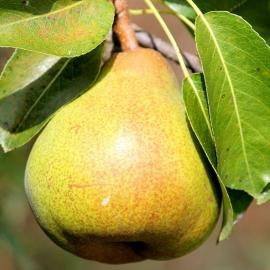 Ароматизатор TPA Pear