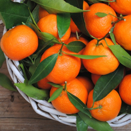 Ароматизатор TPA Orange Mandarin